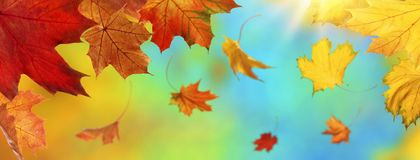 Abstract autumn background. With falling leaves royalty free stock photos