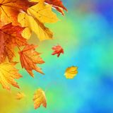 Abstract autumn background. With falling leaves stock images