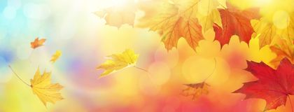 Abstract autumn background. With falling leaves royalty free stock photo