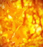 Abstract autumn background Royalty Free Stock Photos