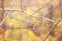 Abstract autumn background with blurred sprigs of trees and water droplets in soft orange and yellow. Light royalty free stock image