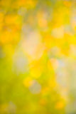 Abstract autumn background bokeh blurred stock images