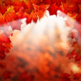 Abstract Autumn Background Border with Maple Leaves Stock Image