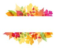 Abstract autumn background. Bright abstract autumn background with falling oak and maple leaves Stock Photos