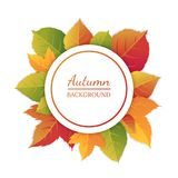 Abstract autumn background with bright leaves. Frame of autumn foliage Royalty Free Illustration