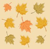 Abstract autumn background with colorful leaves. Stock Images