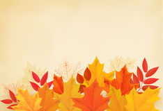 Abstract autumn background with colorful leaves. Royalty Free Stock Image