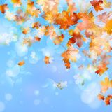 Abstract autumn background. EPS 10. Abstract autumn background with leaves and evening light. And also includes EPS 10 vector Stock Images