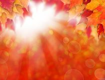 Abstract autumn background with fall maple leaves and sun light stock photo