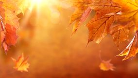Abstract autumn background. With falling leaves stock photography