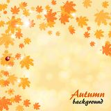 Abstract autumn yellow background with maple leaves. Abstract autumn background with ladybug and maple leaves circling in leaf fall Royalty Free Stock Photo
