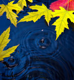 Abstract autumn background with leaves Royalty Free Stock Photography