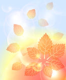 Abstract autumn background with leaves bubbles and Stock Images