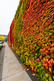 Abstract autumn background. Stock Photos
