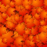 Abstract autumn background with maple leaves Royalty Free Stock Images
