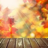 Abstract Autumn Background met Lege Houten Raad Stock Afbeeldingen