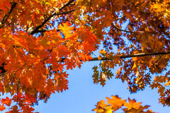 Abstract autumn background, old orange leaves, dry tree foliage, soft focus, autumnal season, changing of nature, bright sunlight Royalty Free Stock Photos