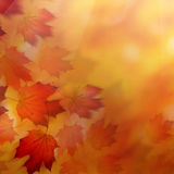 Abstract Autumn Background with Red Leaves Royalty Free Stock Images