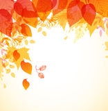 Abstract autumn background. With red and orange falling leaves Royalty Free Stock Photography