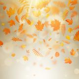 Abstract autumn banner template with colorful leaves. EPS 10 vector illustration