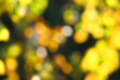 Abstract autumn blur. With yellow, orange, green colors Royalty Free Stock Image