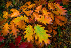 Abstract autumn brunch Royalty Free Stock Photography