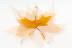 Abstract autumn Royalty Free Stock Images