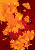 Abstract autumn fallen leaves background Stock Image