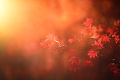 Abstract autumn forest Stock Photography