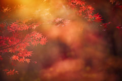 Abstract autumn forest Royalty Free Stock Photo