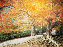 Abstract autumn forest in Japan Stock Images