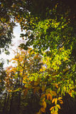Abstract autumn forest view Stock Image