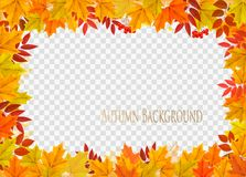 Abstract autumn frame with colorful leaves. On transparent background. Vector Royalty Free Illustration