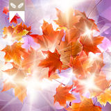 Abstract autumn illustration with maple Leaves. Royalty Free Stock Photography
