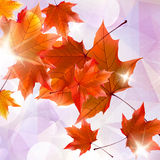 Abstract autumn illustration with maple Leaves. Royalty Free Stock Photo