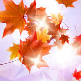 Abstract autumn illustration with maple Leaves. Stock Image