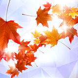 Abstract autumn illustration with maple Leaves. Stock Images
