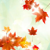 Abstract autumn illustration with maple Leaves. Stock Photos