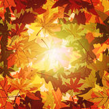 Abstract Autumn Leaf Background Royalty-vrije Stock Afbeeldingen
