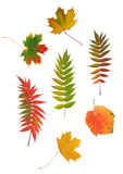 Abstract Autumn Leaf Design Stock Images