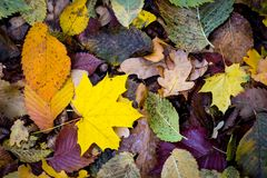 Abstract autumn leafage. Abstract autumn background with leafage Stock Photos