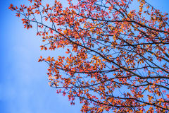 Abstract autumn leave background Stock Photos