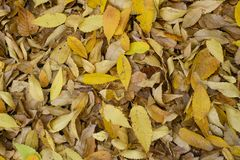 Abstract autumn leaves in autumn suitable as background.  Stock Photo