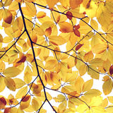 Abstract autumn leaves background Stock Photos