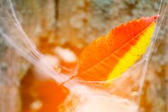 Abstract autumn leaves with bright light. Abstract autumn leaves. Beautiful bright background Royalty Free Stock Images