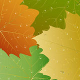 Abstract autumn leaves with drops of rain Stock Photography