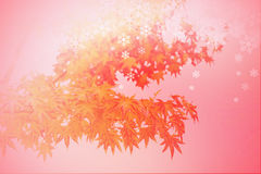 Abstract autumn leaves winter scene, Silhouette shadow of red maple with snow flake on red background. Stock Photo