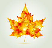 Abstract autumn maple leaf. Made of red and orange leaves Stock Photography