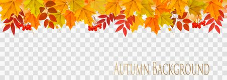 Abstract autumn panorama with colorful leaves. On transparent background Vector Stock Illustration