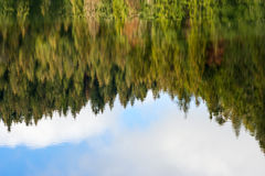 Abstract autumn pine forest reflection in river Royalty Free Stock Photography
